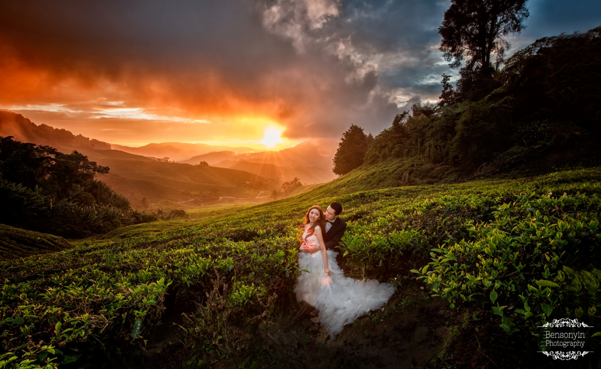 Cameron Highland Sunrise Pre Wedding 187 Benson Yin By