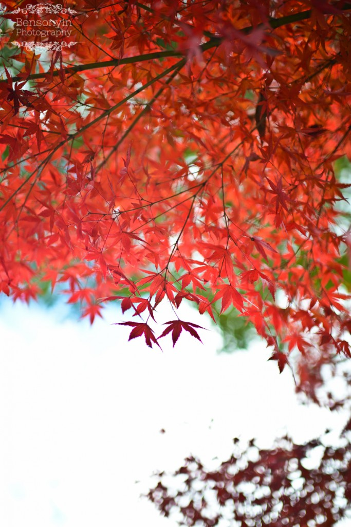 kyoto japan autumn pre-wedding